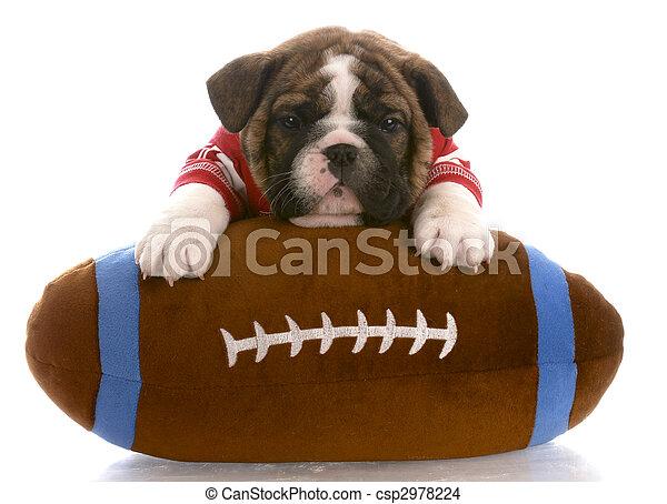 english bulldog puppy wearing red jersey laying on stuffed football -  csp2978224 ebafe6019