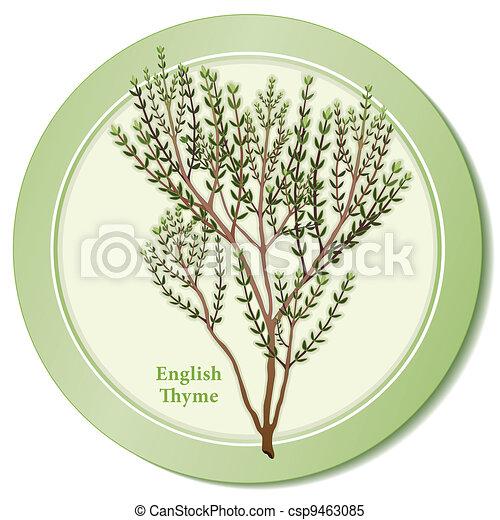 English Thyme Herb Icon - csp9463085