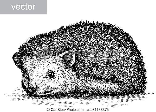 Line Drawing Hedgehog : Hedgehog drawing at getdrawings free for personal use