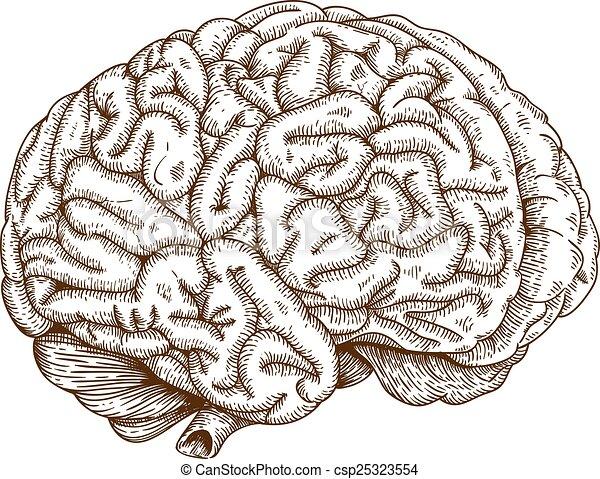 engraving brain - csp25323554