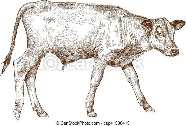 engraving  illustration of calf - csp41300413