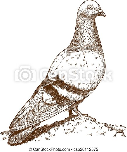 Drawing dove Stock Illustrations  5,417 Drawing dove clip