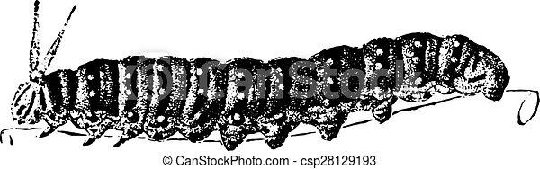 engraving., lagarta, vindima - csp28129193