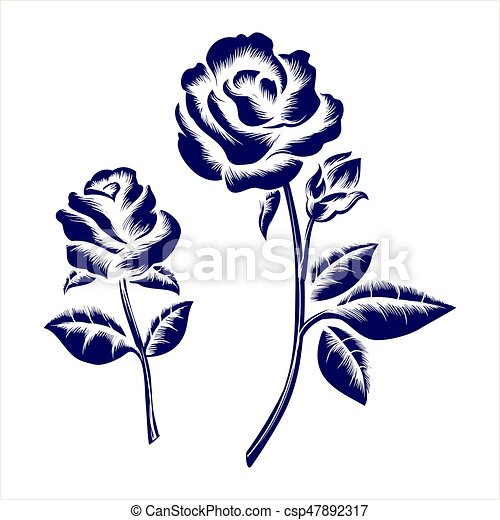 Engraving roses on grey background - csp47892317