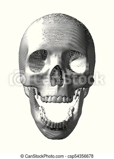 Engraving skull isolated on white background - csp54356678