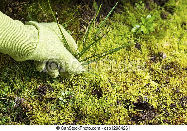 enlever herbe jardin mousse mauvaise herbe gloved image de stock recherchez photos et. Black Bedroom Furniture Sets. Home Design Ideas
