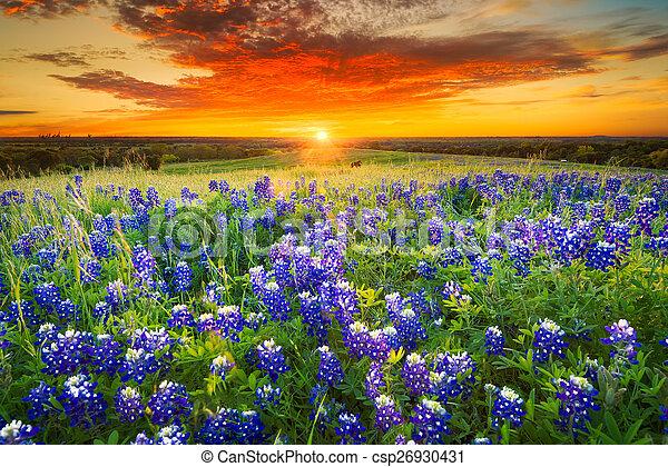 Sunset en Sugar Ridge Road, Ennis, TX - csp26930431