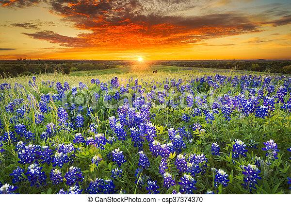 Sunset en Sugar Ridge Road, Ennis, TX - csp37374370