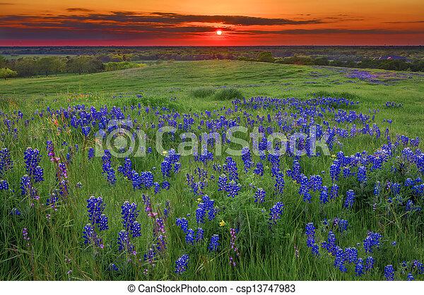 Sunset en Sugar Ridge Road, Ennis, TX - csp13747983