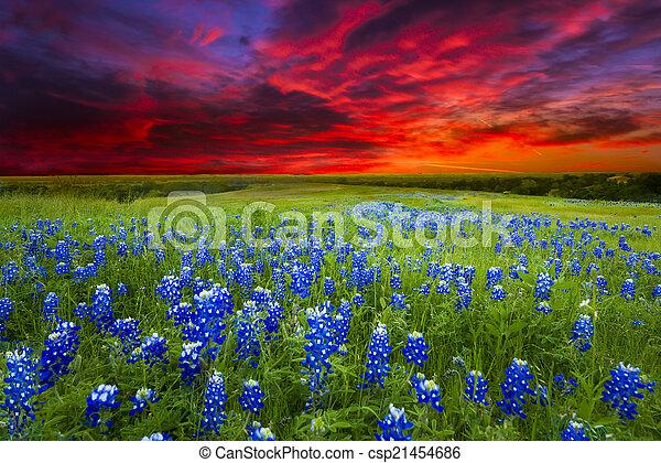Sunset en Sugar Ridge Road, Ennis, TX - csp21454686