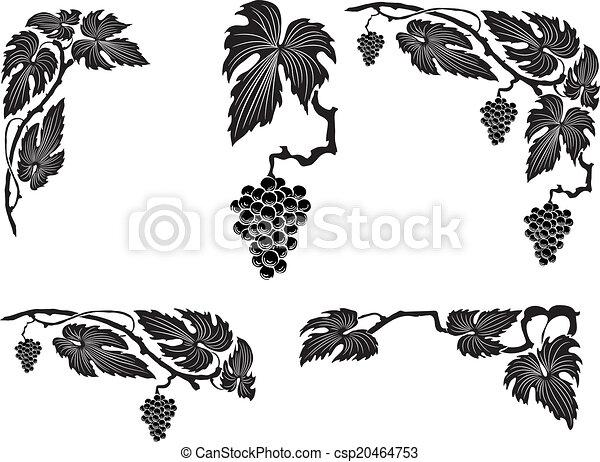 Viña de uva - csp20464753