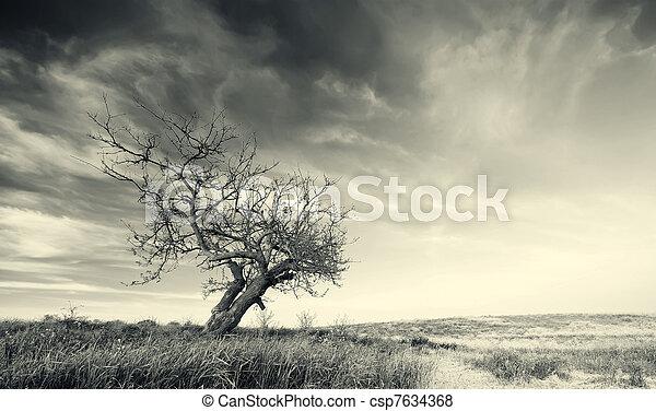 ensam, träd - csp7634368