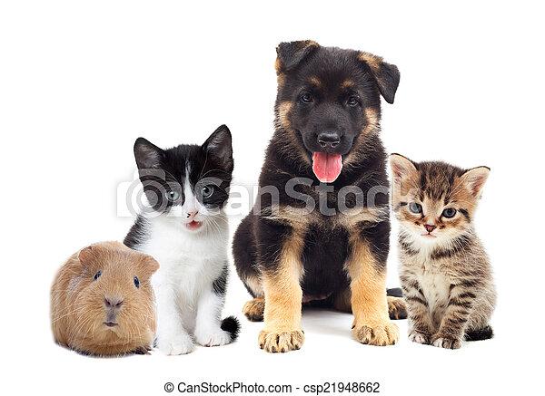 ensemble, animaux familiers - csp21948662