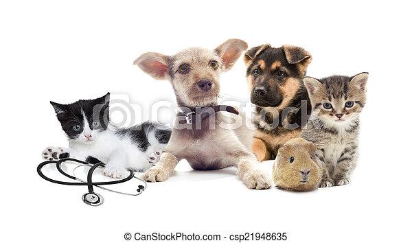 ensemble, animaux familiers - csp21948635