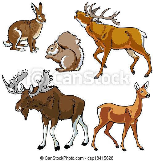 ensemble, animaux, sauvage - csp18415628