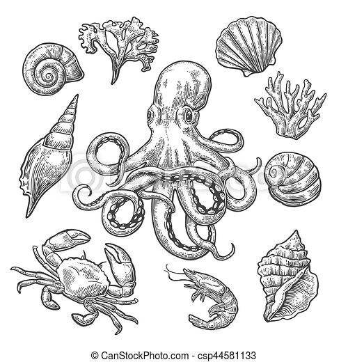 Ensemble Corail Crevette Mer Octopus Coquille Crabe Gravure Ensemble Corail Vendange Isole Crevette Arriere Canstock