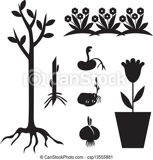 ensemble, jardin, plant - csp13555881