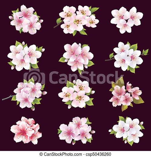 Ensemble Pomme Cerisier Sakura Fleur Fleurs