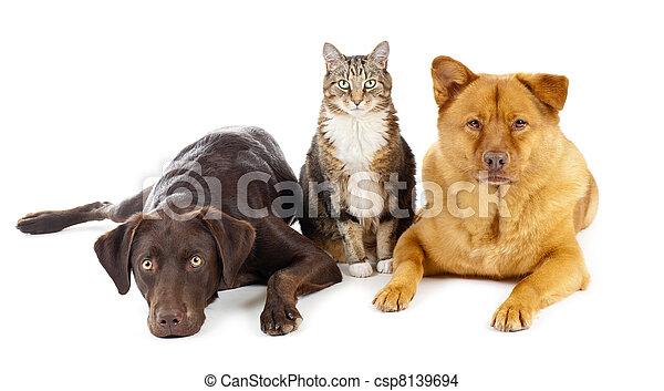 ensemble, trois, animaux familiers - csp8139694