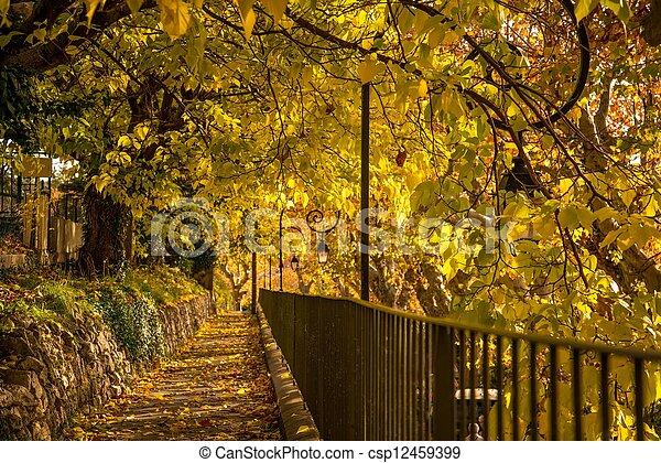 ensoleillé, parc, jour, walkway - csp12459399