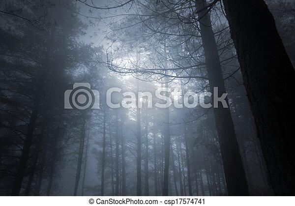 entiers, forêt, lune - csp17574741