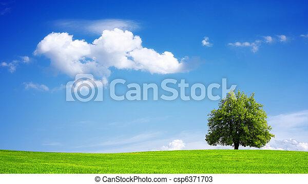 Environment - csp6371703
