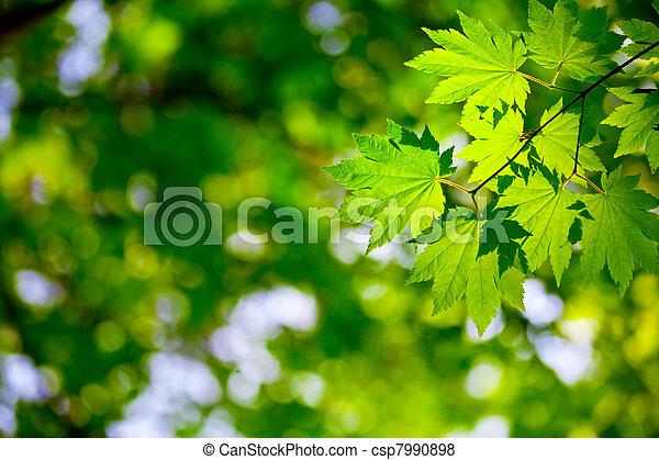 environnement, fond - csp7990898