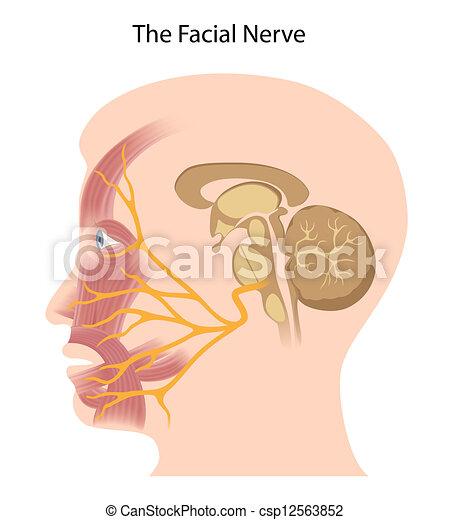 eps10, ansiktsbehandling, nerv - csp12563852