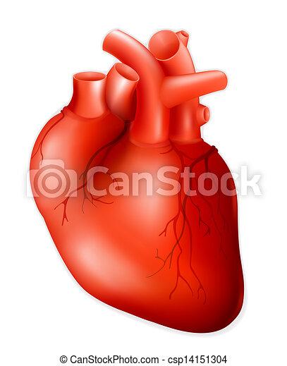 eps10, emberi szív - csp14151304