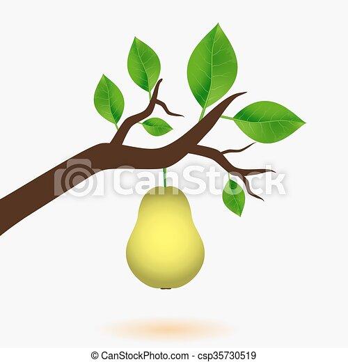 eps10, strom, list, hruška, nezkušený, filiálka - csp35730519