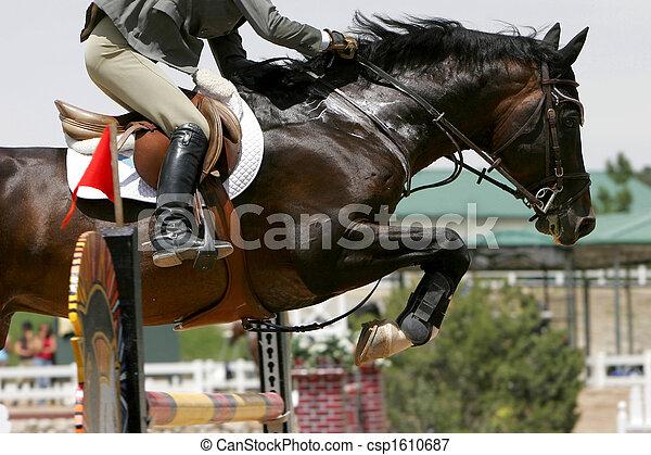 Equestrian Jumping - csp1610687