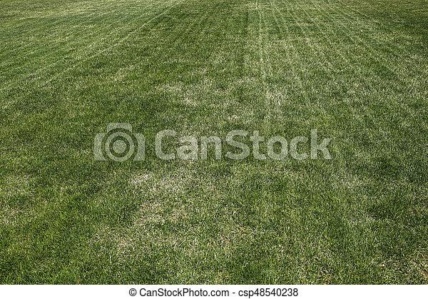 Erba Prato Sfondo Verde