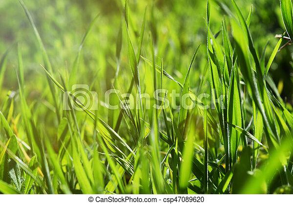 Erba Sfondo Verde Natura Estate Natura Sole Calore Sfondo