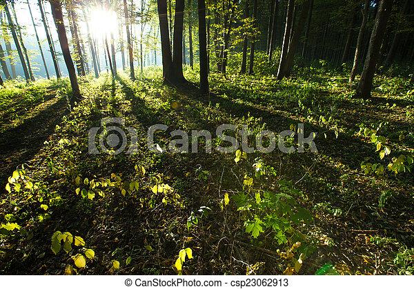 erdő - csp23062913