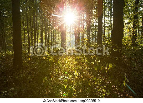 erdő - csp23925519