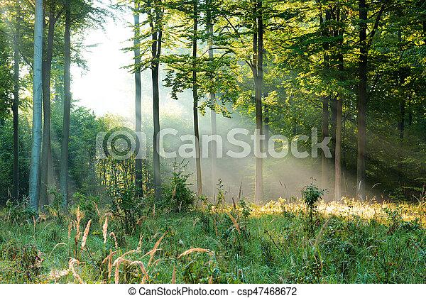 erdő - csp47468672