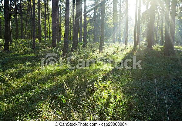 erdő - csp23063084