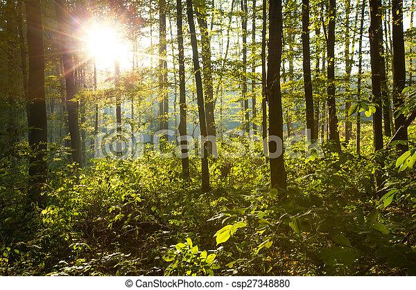 erdő - csp27348880