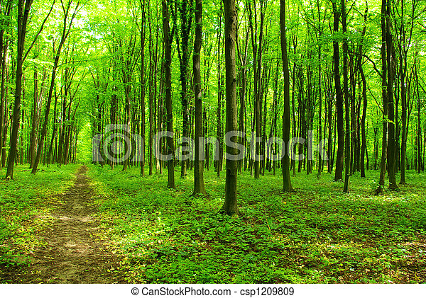 erdő - csp1209809