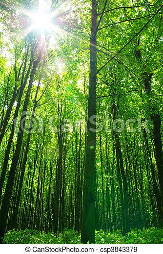 erdő - csp3843379
