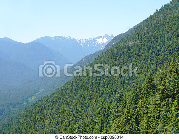 erdő - csp0098014
