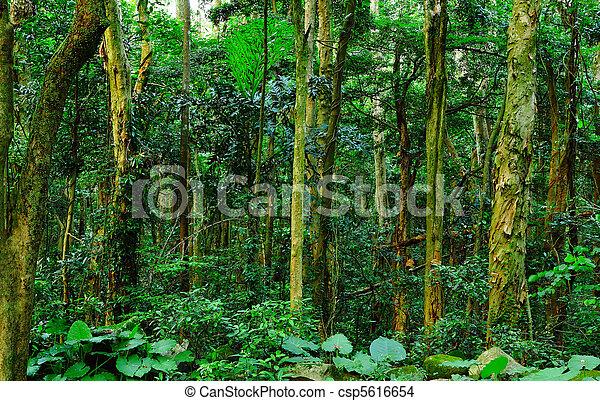erdő - csp5616654