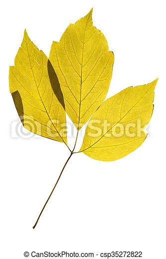 Herbarium Blätter erleuchtet freigestellt herbarium blätter hintergrund