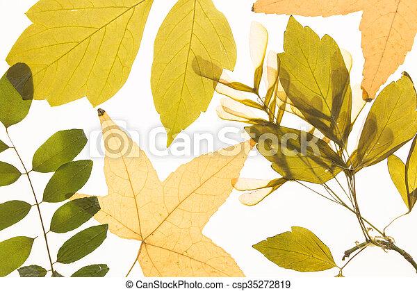 Herbarium Blätter erleuchtet herbarium blätter hintergrund verschieden