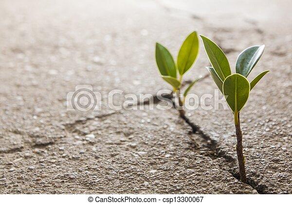 erva daninha, crescendo - csp13300067