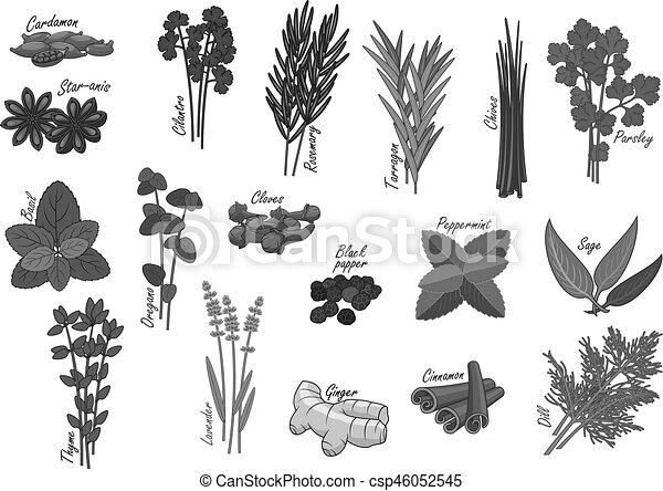 ervas, temperos, vetorial, isolado, ícones - csp46052545