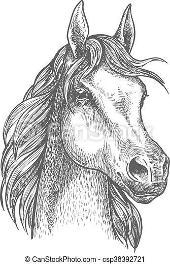 esboço pônei cavalo desenho escocês criando cute cavalo