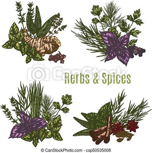 esboços, alimento, erva, desenho, fresco, tempero - csp50535008