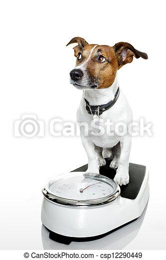 Perro a escala - csp12290449