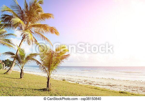 Palma en la playa - csp38150840